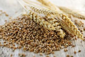grano-saragolla