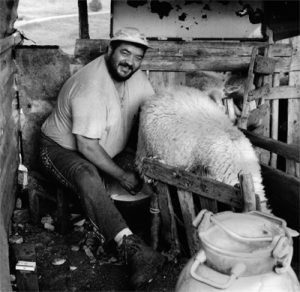 foto-gregorio-formaggi-pecore